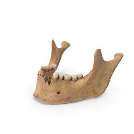 Hueso de la mandíbula humana