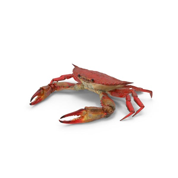 Boiled Blue Crab