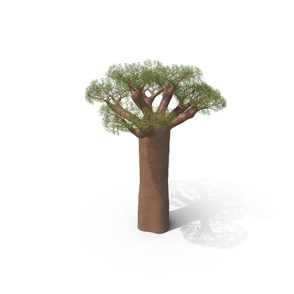 Thumbnail for Дерево Баобаб