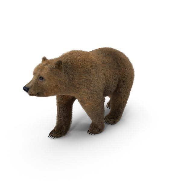 Thumbnail for Brown Bear