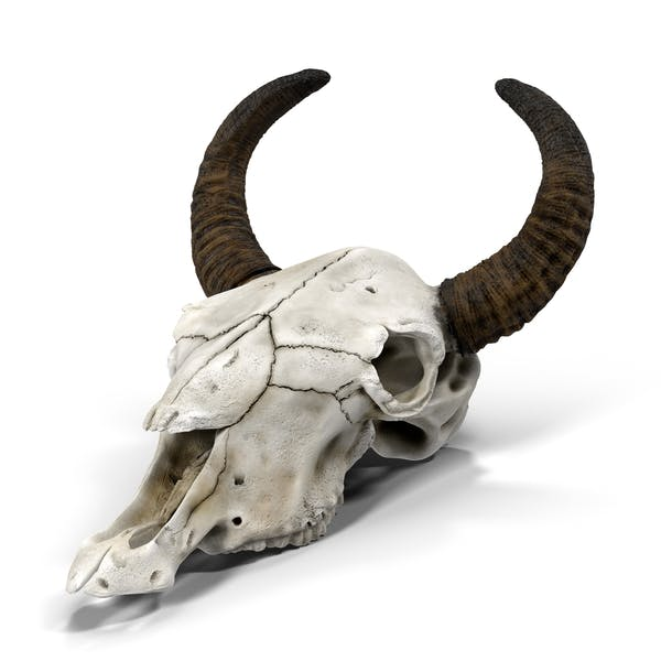 Cráneo de vaca
