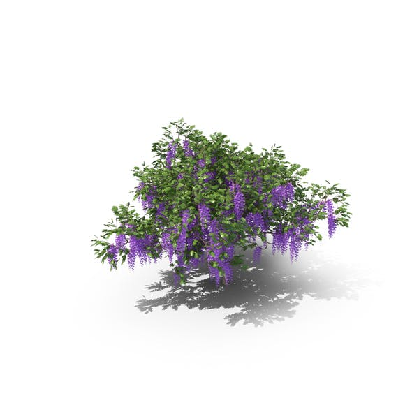 Thumbnail for Wisteria Tree