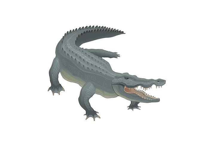 Thumbnail for Crocodile