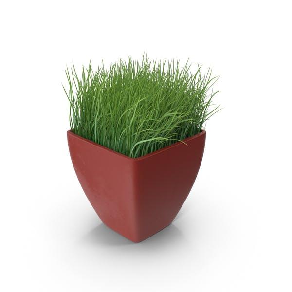 Thumbnail for Ornamental Grass