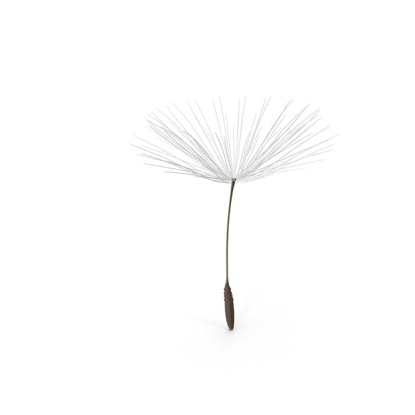 Cover Image for Dandelion Seed