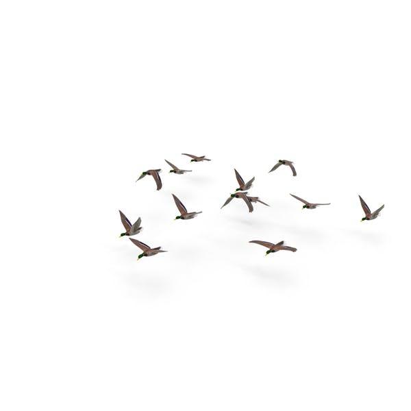 Thumbnail for Flock of Ducks