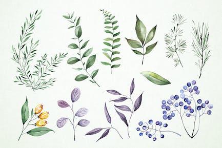 Watercolor Plants Clipart