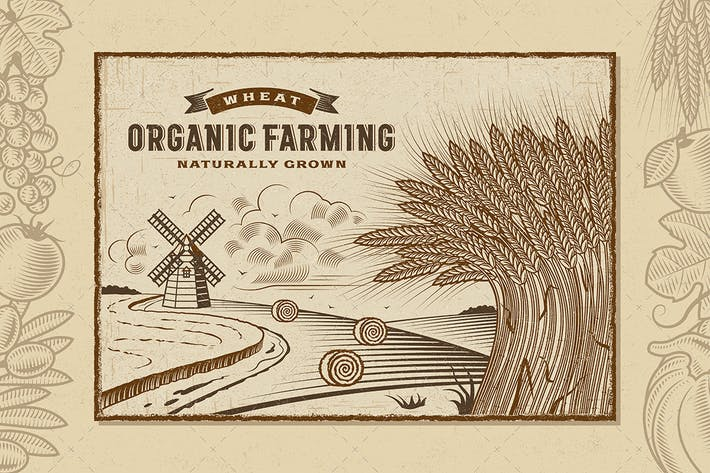 Thumbnail for Wheat Organic Farming Landscape
