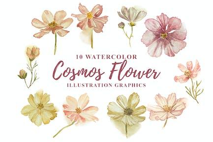 10 Watercolor Cosmos Flower Illustration Graphics