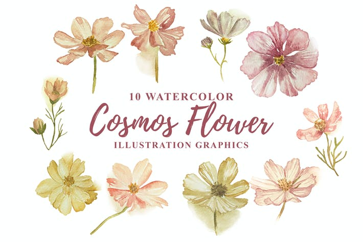 Thumbnail for 10 Watercolor Cosmos Flower Illustration Graphics