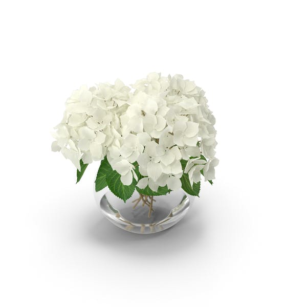 Thumbnail for White Hydrangea Macrophylla in Glass Bowl