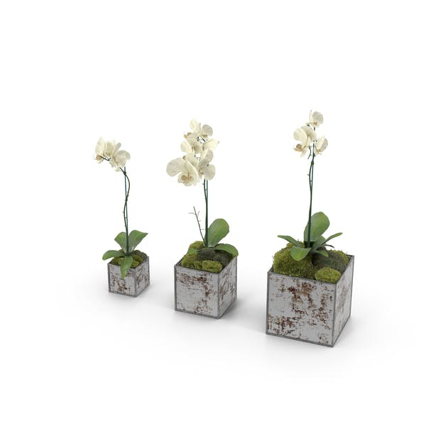 Thumbnail for Orchids in Planters