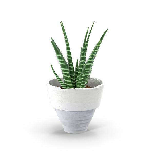 Thumbnail for Aloe in Pot