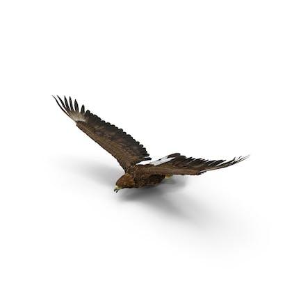 Steinadler fliegen