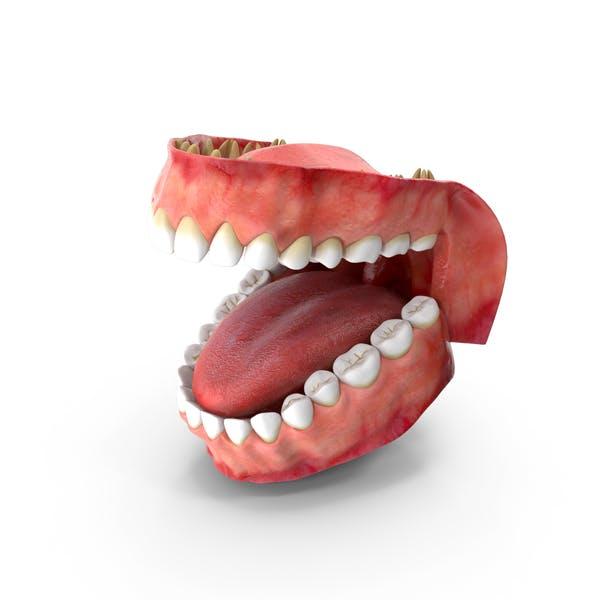 Зубы и десны