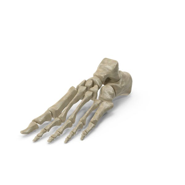 Thumbnail for Skeletal Foot