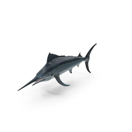 Marlin negro