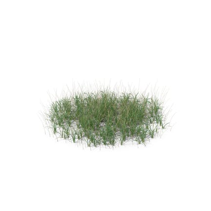 Simple Grass (Large)