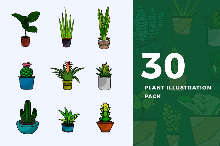 Cover Image For 30 Plant's Illustration Pack