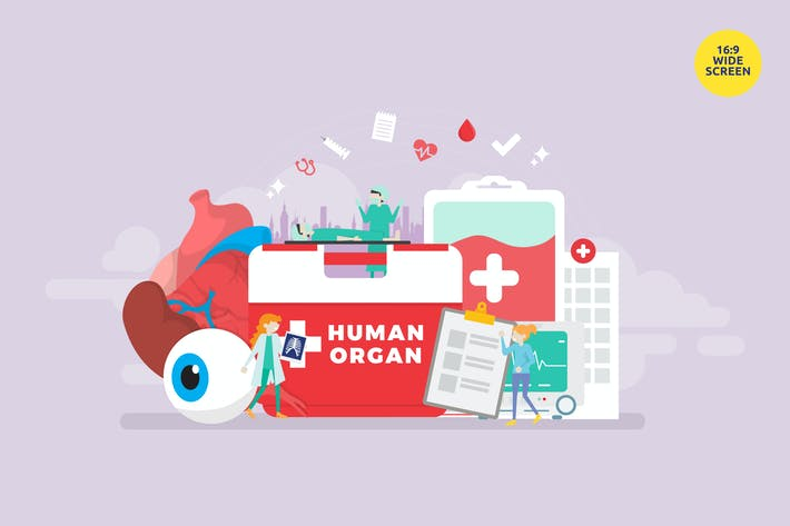Thumbnail for Human Organ Donor Transplantation Vector Concept