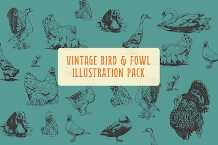 Bird and Fowl Vintage Illustration