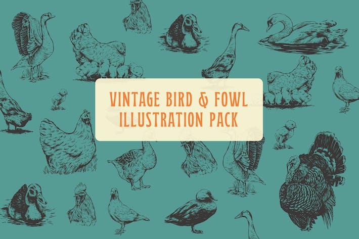 Weinlese-Illustration von Vögeln und Ge