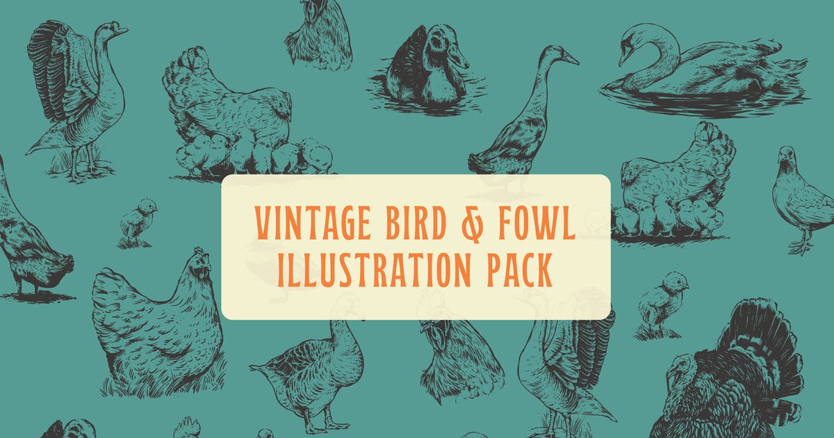 Download Bird and Fowl Vintage Illustration by MartypeCo