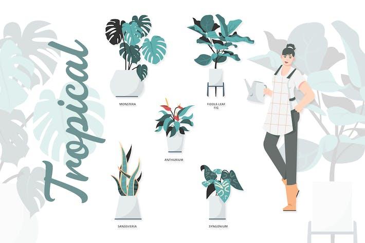 Tropical - Illustrationen